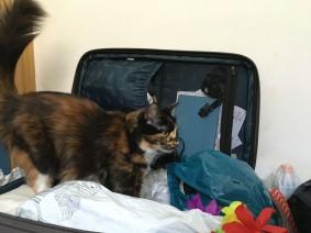 Rucksack und Koffer richtig packen - gehört nicht zur Packliste für Sommerreisen Festivals Urlaube Backpacking Weltreisen - Gehört nicht in den Koffer